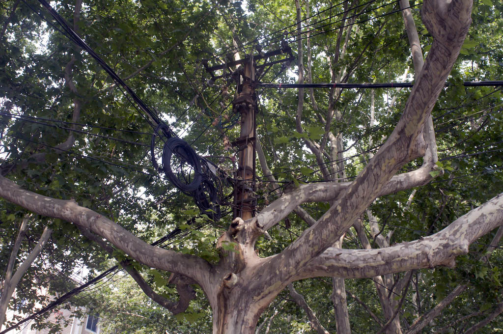 Handan: cable routed through branches