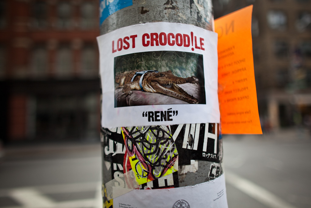 New York: Lost Crocodile